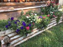 Caixa de madeira do jardim imagem de stock