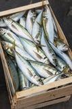 Caixa de peixes frescos Fotografia de Stock Royalty Free