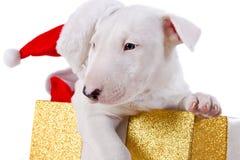 Caixa de presente do Natal com filhote de cachorro Fotos de Stock