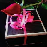 Caixa de presente e rosa do vermelho Fotografia de Stock