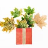 Caixa de presente vermelha com as folhas secas do outono colorido Foto de Stock Royalty Free