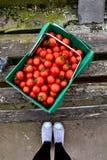 Caixa de tomates de cereja/fundo de madeira Fotos de Stock Royalty Free