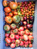 Caixa de tomates imperfeitos da herança e da herança no farrmers Fotografia de Stock Royalty Free