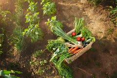 Caixa de vime com vegetais Fotos de Stock
