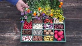 caixa do ingrediente de alimento e flores médicas das ervas filme