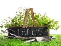 Caixa do jardim com a variedade das ervas e das ferramentas Fotos de Stock Royalty Free