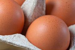 Caixa do ovo com os ovos marrons frescos fotografia de stock