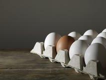 Caixa dos ovos brancos com o um ovo de Brown Imagens de Stock Royalty Free