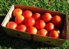 Caixa dos tomates Imagem de Stock Royalty Free