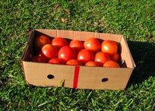 Caixa dos tomates Fotografia de Stock Royalty Free