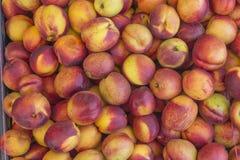 Caixa enchida com as nectarina frescas Imagem de Stock
