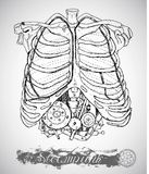 Caixa humana da anatomia com mecanismo do vintage nos reforços no estilo do punk do vapor Fotografia de Stock