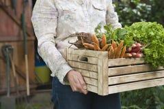Caixa levando da mulher completamente de vegetais recentemente colhidos foto de stock royalty free