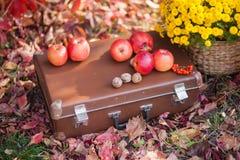 Caixa nas folhas de outono, crisântemos em uns vasos de flores, maçãs e porcas fotografia de stock
