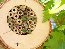 Caixa-ninha da abelha imagens de stock