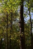 Caixa-ninha na floresta fotografia de stock