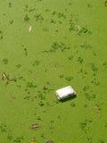 Caixa suja da espuma Foto de Stock Royalty Free