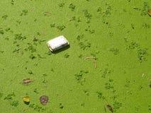 Caixa suja da espuma Imagens de Stock