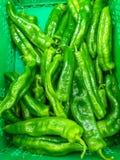 a caixa verde plástica na abundância do mercado de pimentas de verde do montão apenas colheu pronto para ser vendido aos clientes foto de stock royalty free