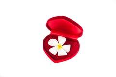 Caixa vermelha de veludo Foto de Stock