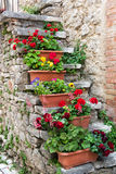 Caixas coloridas das flores em escadas de pedra velhas Fotografia de Stock Royalty Free