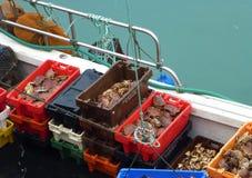 Caixas completamente dos caranguejos em um barco fotos de stock