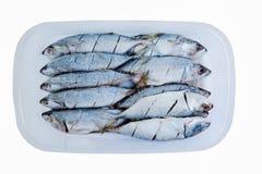 Caixas congeladas cavala do alimento com cozimento Fotos de Stock Royalty Free