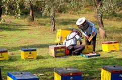 Caixas da abelha e depositários 6 da abelha foto de stock