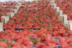 Caixas da morango Foto de Stock Royalty Free