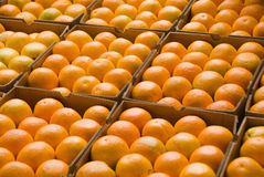 Caixas das laranjas Imagens de Stock Royalty Free