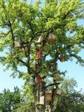 Caixas de assentamento completas da árvore no jardim, Lituânia Imagens de Stock