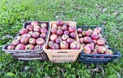 Caixas de maçãs sobre a grama fotos de stock