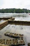 Caixas de madeira com as ostras no Riec-sur-Belon Brittany France imagens de stock royalty free