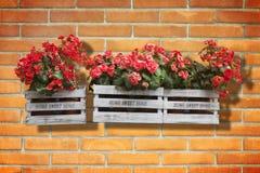 Caixas de madeira das flores contra uma parede de tijolo velha - casa doce home Imagem de Stock Royalty Free