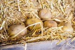 Caixas de madeira tradicionais do fazendeiro com batatas frescas Fotos de Stock Royalty Free