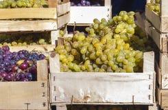 Caixas de uvas Fotos de Stock