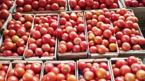 Caixas dos tomates vídeos de arquivo