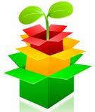 Caixas e sprout do vetor. Imagens de Stock Royalty Free