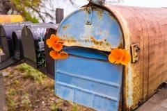 Caixas postais do grunge da papoila de Califórnia ao longo da rota pacífica 1 da estrada Fotos de Stock Royalty Free