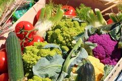 Cajón de verduras variadas foto de archivo