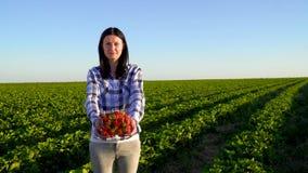 Caja bonita joven del control de la muchacha por completo de fresas que se colocan en la plantación verde almacen de metraje de vídeo