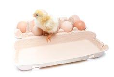 Caja con huevos y un pequeño pollo Foto de archivo