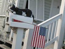 Caja con un gato y un indicador americano Foto de archivo libre de regalías