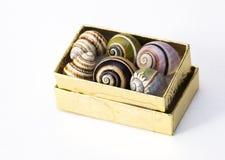 Caja de cáscaras del caracol Fotos de archivo