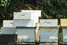 Caja de la abeja Imagenes de archivo