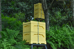 Caja de la abeja Imágenes de archivo libres de regalías