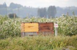 Caja de la abeja de madera de pino Fotos de archivo