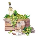 Caja de la acuarela de botella y de uvas, copas de vino Libre Illustration