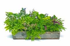 Caja de la flor por completo de hierbas foto de archivo libre de regalías