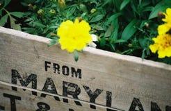 Caja de madera de la flor de Maryland Imagenes de archivo